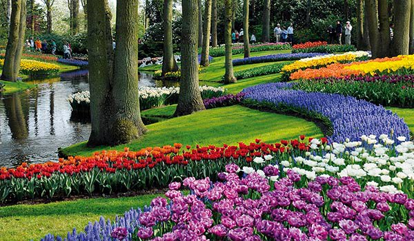 Цветочные поля сада