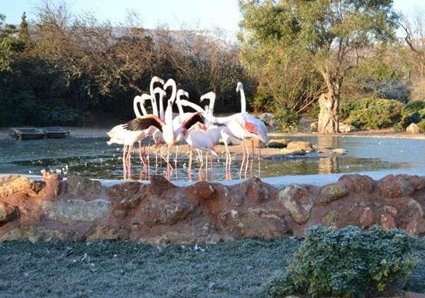 Зоологический парк Аттики