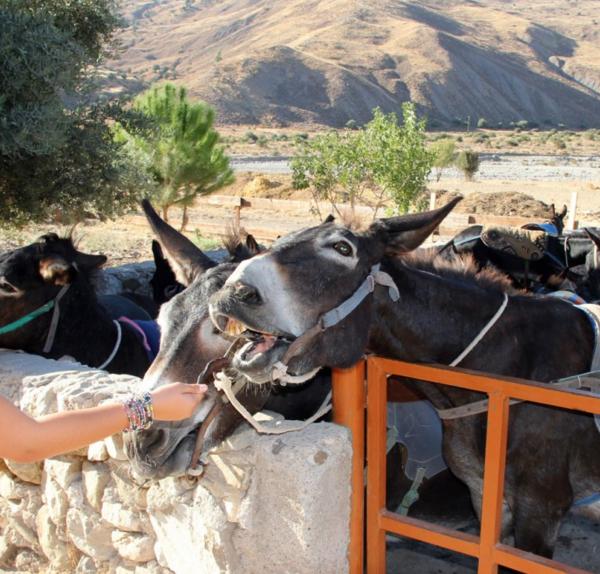 Друзья кипрский осликов