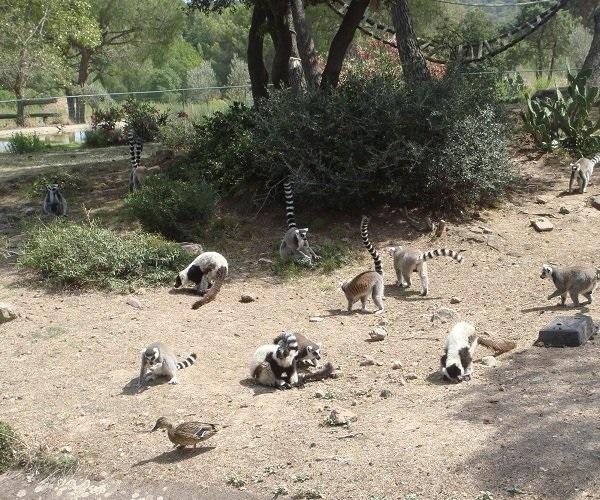 Зоопарк «Frejus»