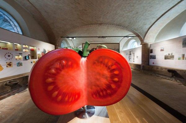 Музей томатов