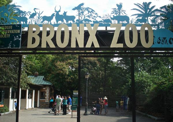 Bronx Zoo (Зоопарк Бронкс)