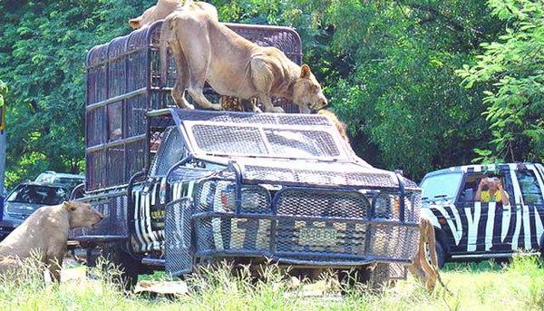 Зоопарк Safari World