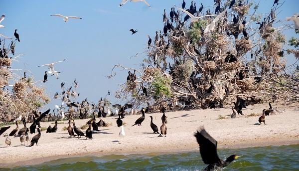 На острове обитают птицы