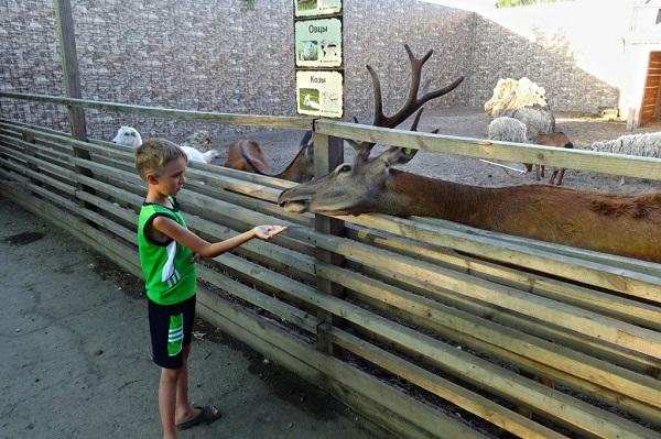 """Зоопарк """"Лукоморье"""""""