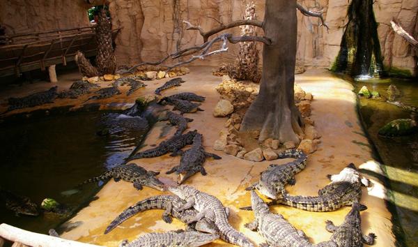 Зоологический сад