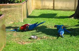 Зоопарк «Parco Cappeller»