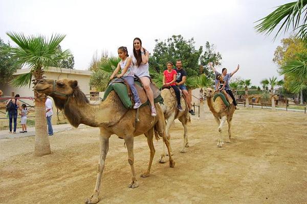 Парк верблюдов «Кэмэл-парк»