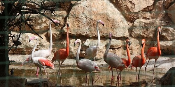 Зоопарк Пафоса (Парк птиц и животных)