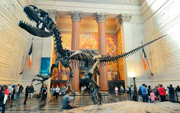 American Museum of Natural History (Американский музей естественной истории)