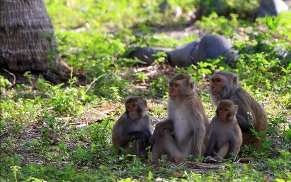 Остров Обезьян (Monkey Island или Hon Lao)
