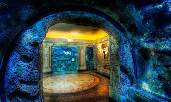 Океанариум «Акулий Риф» (Shark Reef Aquarium)