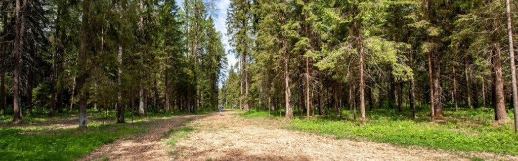 Сосновый лес отеля Пересвет